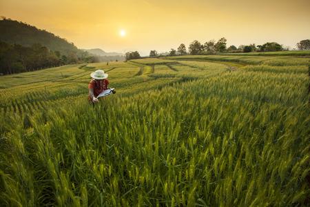 investigando: Investigaci�n para el Desarrollo del Campo de cebada en Samoeng Chiang Mai Tailandia Foto de archivo