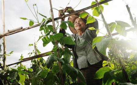 pobreza: Abuela asiática selección de verduras