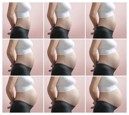 months: Pregnancy Step by Step