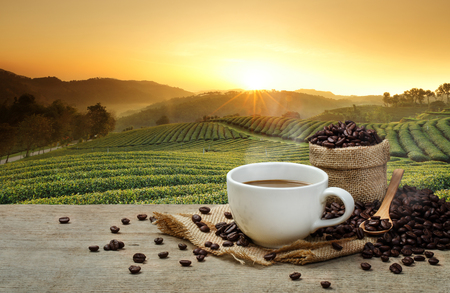 cuchara: Taza de café caliente con granos de café sobre la mesa de madera y el fondo plantaciones