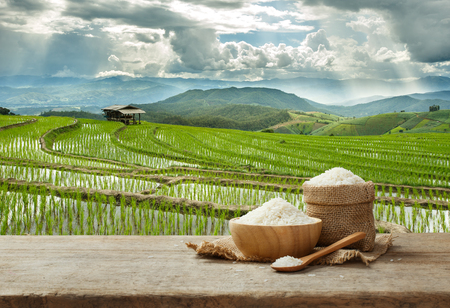 Asian white rice or uncooked white rice with the rice field background
