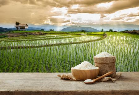 riso bianco asiatico o riso bianco crudo con lo sfondo campo di riso