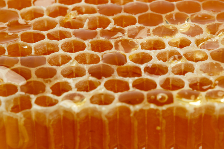 drizzler: Honeycomb in closeup