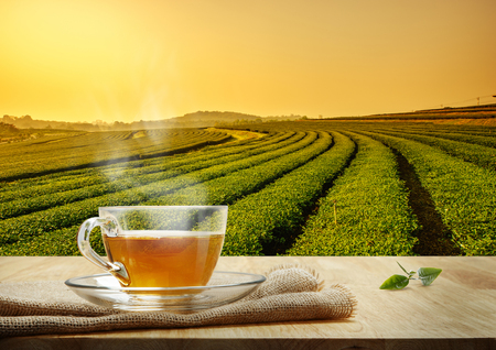 Warm cup of tea on the wooden table and the tea plantations background, Sunrise time