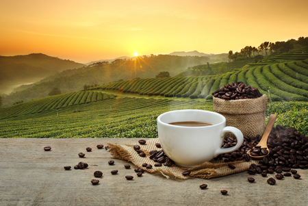 Hot Coffee cup with Coffee beans on the wooden table and the plantations background Imagens