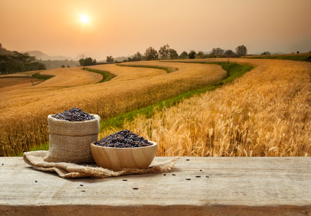 Black Rice in bowl and burlap sack on wooden table with the golden rice field background Stok Fotoğraf