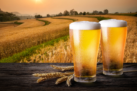 Two glass of beer with wheat on wooden table. Glasses of light beer with barley and the plantations background.
