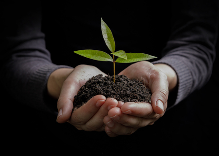 Two hands holding and caring a young green plant / planting tree / growing a tree / love nature / save the world