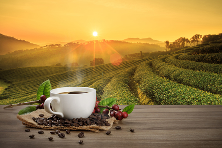 Hot coffee cup with fresh organic red coffee beans and coffee roasts on the wooden table and the plantation background with copy space for your text. Stock Photo