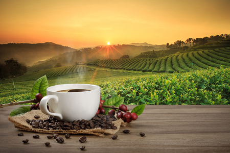Heiße Kaffeetasse mit frischen Bio-roten Kaffeebohnen und Kaffeeröstungen auf dem Holztisch und dem Plantagenhintergrund mit Kopierraum für Ihren Text.