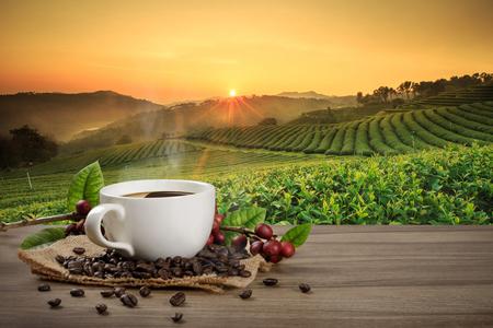 Taza de café caliente con granos de café rojos orgánicos frescos y café tostado en la mesa de madera y el fondo de la plantación con espacio para copiar el texto.