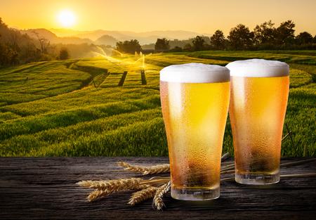 Dos vasos de cerveza con trigo en la mesa de madera. Vasos de cerveza ligera con cebada y las plantaciones de fondo.