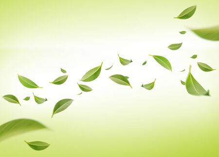 Flying whirl green leaves in the air, Healthy products by organic natural ingredients concept, Empty space in studio shot on green background long banner