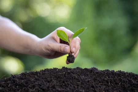 Hand of women planting the seedlings in fertile soil. 免版税图像