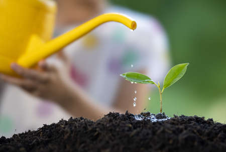The little girl watering plant the seedlings after planting.