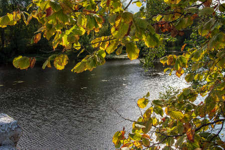 Yellow-red leaves of autumn trees on a background of sky and water.
