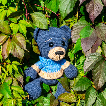 Doll Amigurumi bear sits in the leaves of wild grapes.