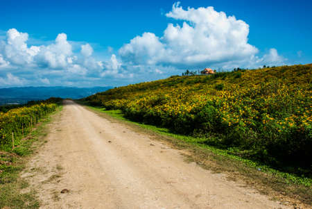 reclamation: Mexican Sunflower with dirt road and light cloud blue sky, reclamation field, Mae Moh mine, Thailand Stock Photo