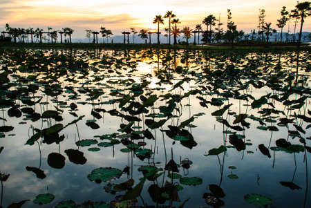 a lotus pond in twilight, top of reclamation field, Mae Moh mine, Lampang, Thailand photo