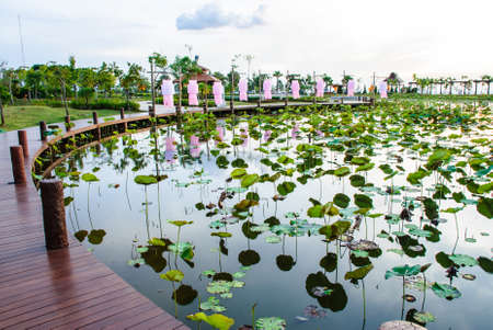 reclamation: a lotus pond with brown boardwalks, top of reclamation field, Mae Moh mine, Lampang, Thailand Stock Photo