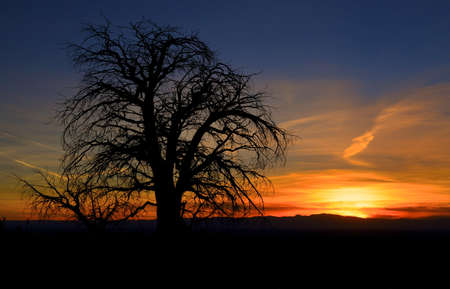 Bare Tree with Colorful Sunset Banco de Imagens