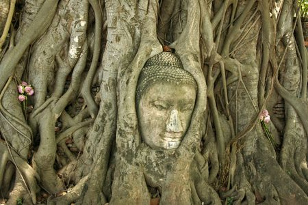 iconic buddhas head in the ancient thai capital of ayutthaya Stock Photo - 6541356