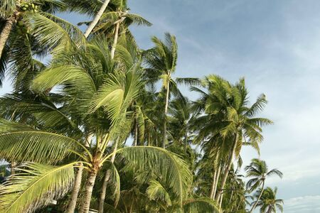 palms trees against blue skies of boracay island in the philippines Stock Photo - 6558116