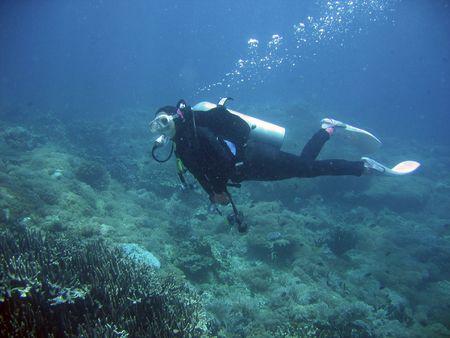 fond marin: plongeur femelle exploration des r�cifs coralliens dans le phillipines