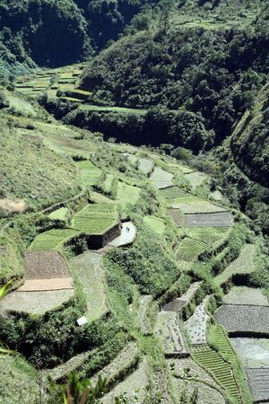 steep: vegetables and rice being grown on steep valey sides of central cordillera northern luzon the philippines