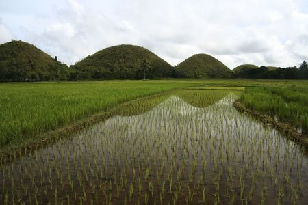 bohols iconic chocolate hillr reflected in rice paddies in the philippines photo