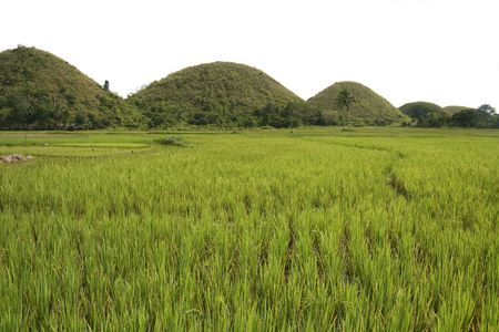 the seven sisters, part of the chocolate hills of bohol, rising up over rice paddies in the philippines photo