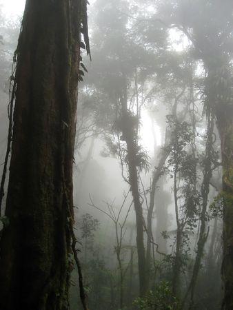 slopes: cloud forest on slopes of mount kinabalu in sabah borneo Stock Photo