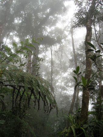 cloud forest on slopes of mount kinabalu in sabah borneo Stock Photo