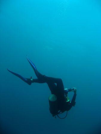 scuba diving sipadan in sabah borneo photo