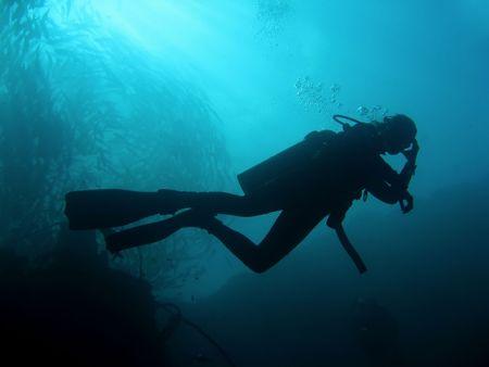 scuba diver underneath schooling fish sipadan in sabah malaysian borneo photo