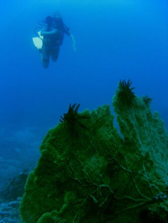 scuba diver exploring coral reef off gili trawangan lombok indonesia photo