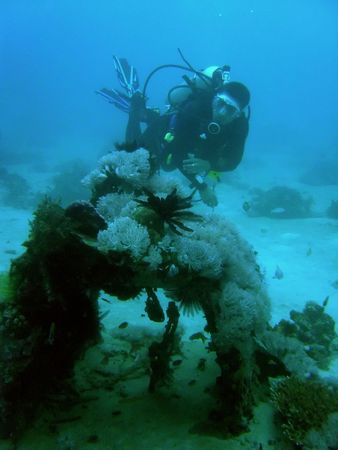 scuba diver explore downed zero fighter in sabang puerto galera mindoro the philippines photo