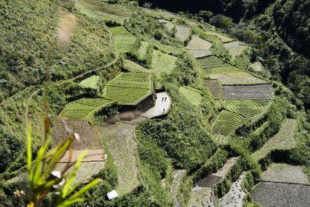 gradas: patrones de terrazas de los campos en el norte de Filipinas de cultivos Foto de archivo