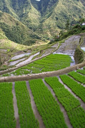 rice terraces in northern luzon the philippines photo