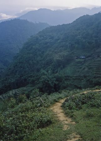 gradas: terrazas de arroz en cascada fuera empinadas valles en vietnam del norte de sa pa Foto de archivo