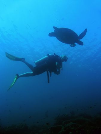 scuba diver and green sea turtle side by side sipadan in sabah borneo