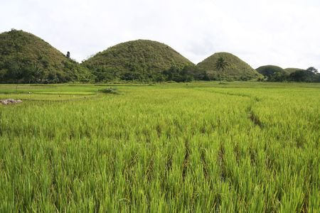 The seven sisters, part of the chocolate hills of bohol, rising up over lush green rice paddies in the philippines photo