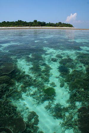 coral reefs of sipadan island in sabah borneo photo