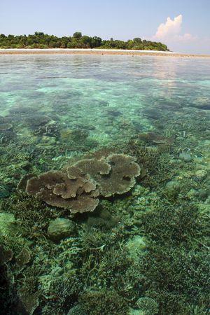 coral reefs on sipadan island marine sanctuary in sabah malaysian borneo photo