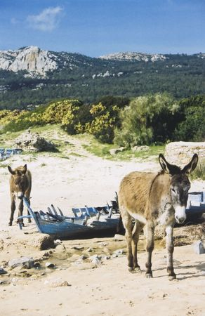 donkeys inspect old wooden boat on beach in andalucia photo