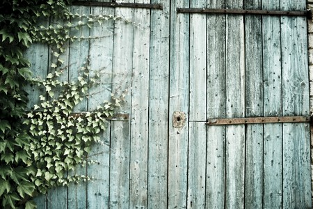 ivy growing on old weathered barn doors in provence france photo