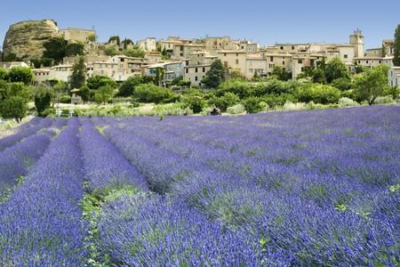 Lavendel Blumen wachsen unter alten Hügel Stadt in der Provence im Süden von Frankreich  Standard-Bild - 7978135
