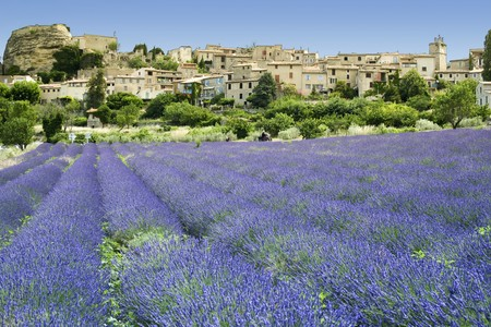 lavender flowers growing below ancient hill town in provence the south of france Stock Photo