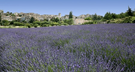 lourmarin: lavender flowers growing below ancient hill town in provence the south of france Stock Photo