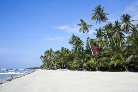 bohol: palm tree fringed white sand alona beach on bohol island the philippines Stock Photo